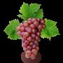 Саженцы Винограда (46)