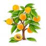 Саженцы Колоновидных абрикосов в Череповце почтой