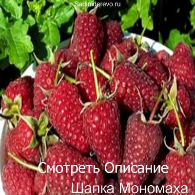 Малина Шапка Мономаха