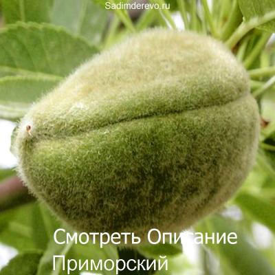 Миндаль Приморский