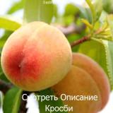 Персик Кросби